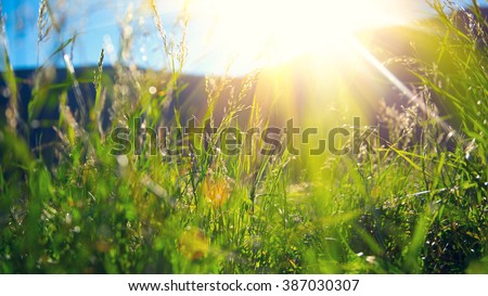 Beautiful nature landscape - Alpine meadow. Grass closeup with sunbeams. Beautiful Nature landscape with sun flare - stock photo