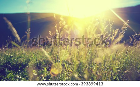 Beautiful nature landscape - Alpine meadow. Grass closeup with sunbeams. Beautiful Nature landscape with sun flare. Vintage Sepia toned - stock photo