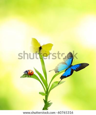Beautiful nature theme - stock photo