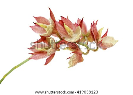 Beautiful of pink orchid flower isolated on white background - stock photo