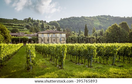 Beautiful old manor surrounded with vineyard - stock photo