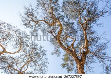 Beautiful old trees in Ananda temple at Bagan, Myanmar - stock photo