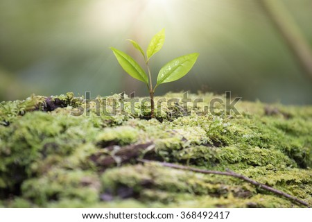 Beautiful one tree grown up in the wild and light. - stock photo