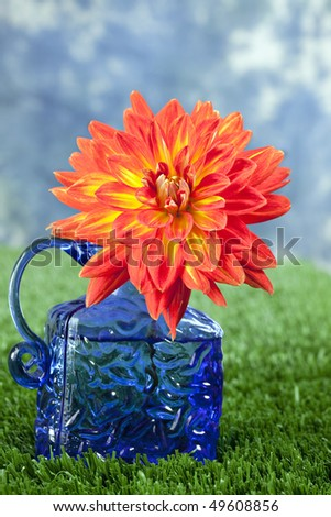 Beautiful orange and yellow dahlia in cobalt blue bottle sitting in grass in front of blue sky - stock photo