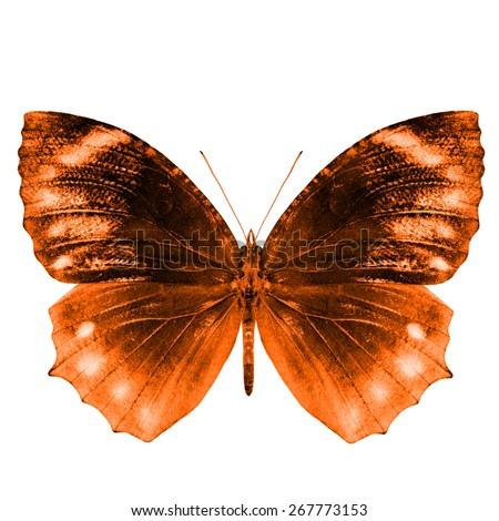 Beautiful Orange Buterfly isolated on white background - stock photo