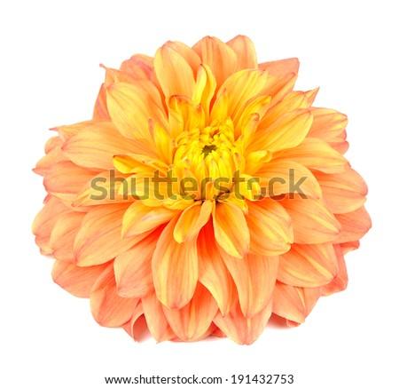 Beautiful Orange Dahlia Isolated on White Background - stock photo