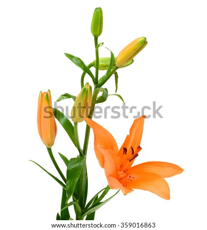 Beautiful orange lily flower bouquet isolated on white background - stock photo
