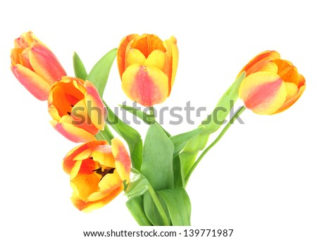Beautiful orange tulips isolated on white - stock photo