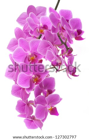 Beautiful orchid flower - stock photo