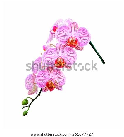 Beautiful orchid flower. - stock photo