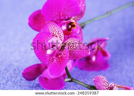 Beautiful orchid on blue background - stock photo
