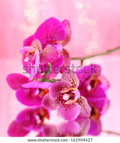 Beautiful orchid on pink background - stock photo