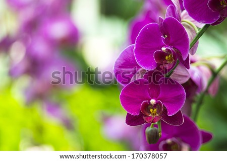 Beautiful Orchids - stock photo