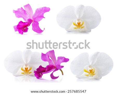 beautiful  orchids on white background - stock photo
