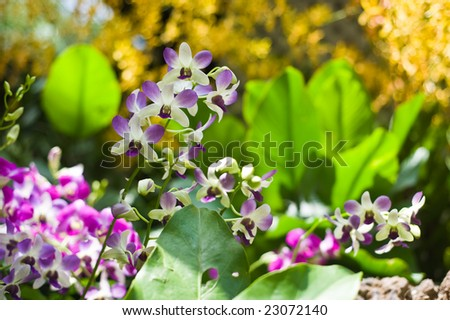 beautiful orchids outdoors - stock photo