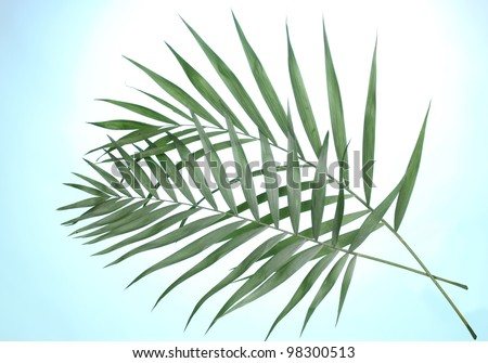 Beautiful palm leaves on blue background - stock photo