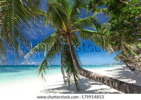Beautiful palm on white beach, Boracay island, Philippines  - stock photo