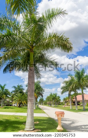 Beautiful palm trees on the sides of a narrow street in Cape Coral, Florida - stock photo