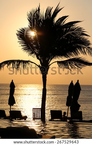 beautiful palm trees stand on the beach at sunset - stock photo