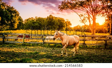 Beautiful palomino horse running across the pasture at sunset - stock photo