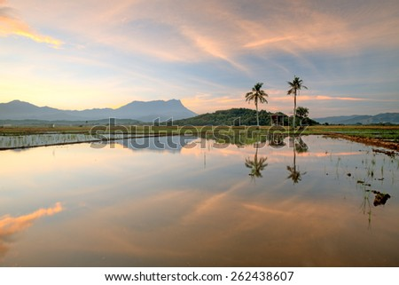 Beautiful panoramic rural landscape in the morning at paddy field, reflections old hut with trees on background mount kinabalu. (Shallow DOF, slight motion blur) - stock photo