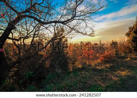 Beautiful panoramic scene with skyline autumn colors, Tuscany, Italy. - stock photo