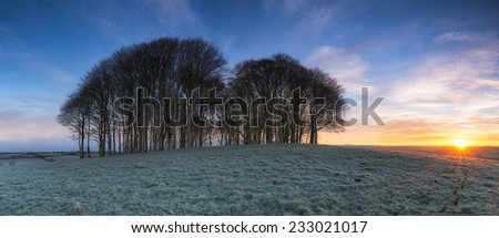 Beautiful panoramic sunrise over a copse of Beech trees on a hill near Lifton on the Devon and Cornwall border - stock photo
