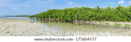 Beautiful panoramic view of juvenile and mature mangroves on shoreline at low tide of lagoon Chacmuchuc on Isla Blanca, Quintana Roo, Mexico - stock photo