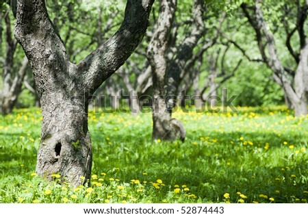Beautiful park garden in spring - stock photo