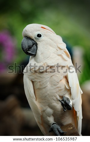 Beautiful parrot posing in camera - stock photo