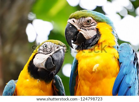 beautiful parrots - stock photo