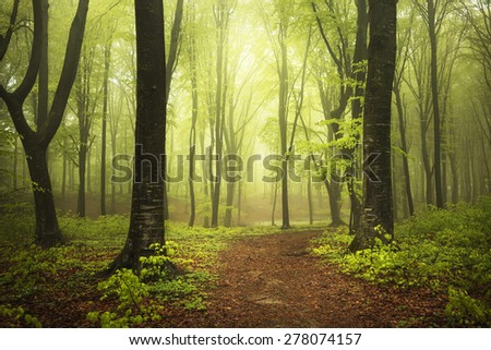 Beautiful path in misty forest - stock photo