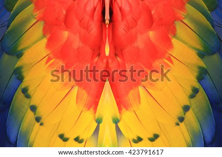 Beautiful pattern background texture made from Scarlet Macaw feathers. - stock photo