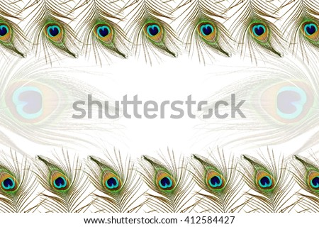 Beautiful peacock feathers as background with text copy space - stock photo