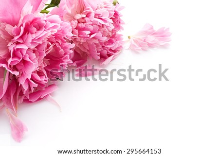 Beautiful peony flowers isolated on white background - stock photo