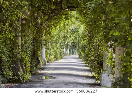 Beautiful pergola in the park - stock photo