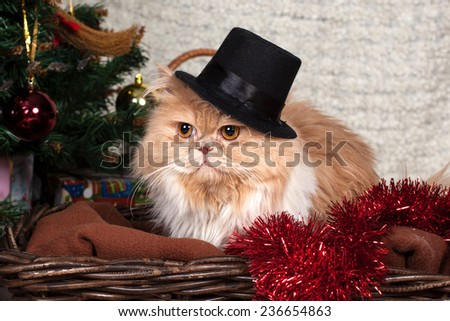beautiful Persian cat at a New Year tree  - stock photo