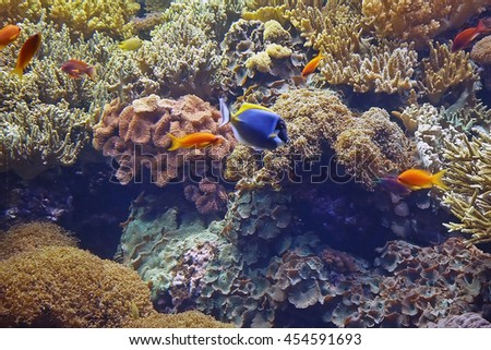 Beautiful photograph of colorful corals, algae aquatic plants and fishes in the Lisbon Oceanarium, Portugal. Wild nature background. The underwater world. - stock photo