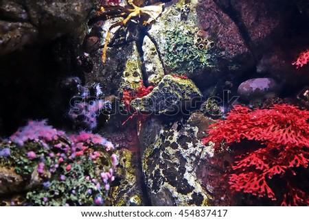 Beautiful photograph of colorful underwater corals and algae aquatic plants in the Lisbon Oceanarium, Portugal. Wild nature background. - stock photo