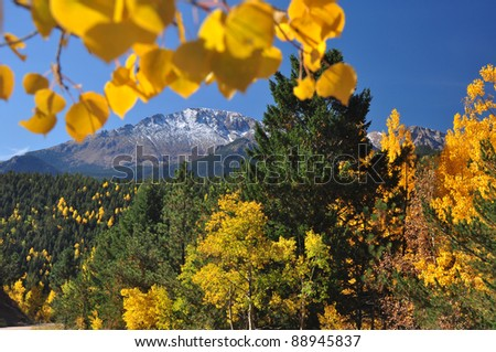 Beautiful Pikes Peak in Autumn with yellow Aspen Leaves - stock photo