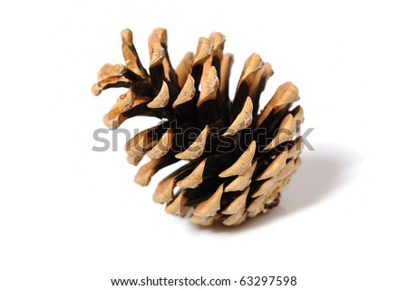 beautiful pine cone isolated on white background - stock photo