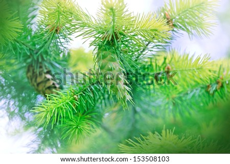 Beautiful pine cone on the Christmas tree - stock photo