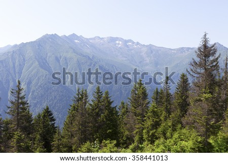Beautiful pine trees on background high mountains. - stock photo