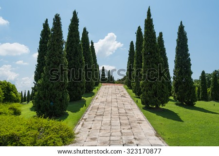 Beautiful pines in royal flora garden, Chiangmai - stock photo