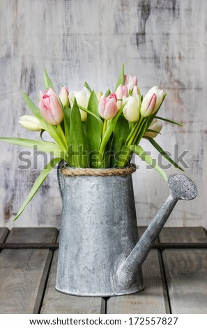 Beautiful pink and white tulips in silver watering can on rustic wooden table - stock photo