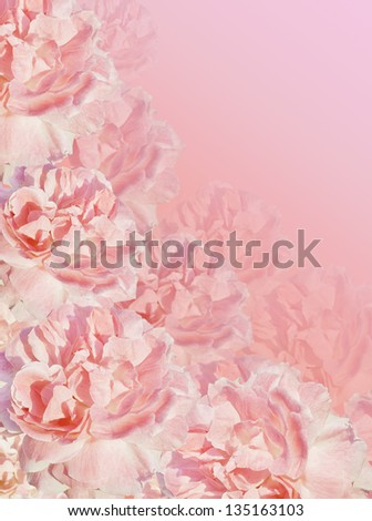 Beautiful pink background with wild roses with dew. - stock photo