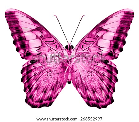 Beautiful pink butterfly in fancy color isolated on white background - stock photo