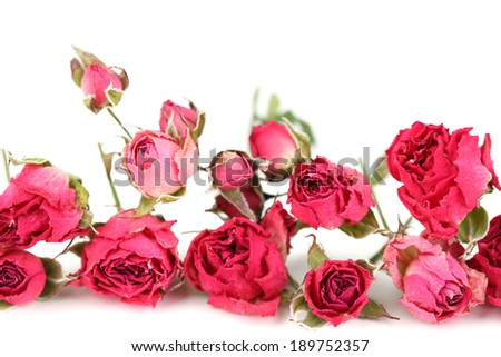 Beautiful pink dried roses, isolated on white - stock photo