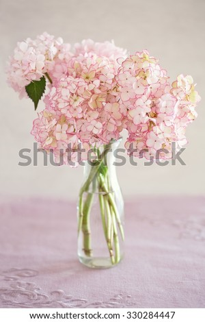 Beautiful pink  hydrangea flowers in a vase on a table. - stock photo