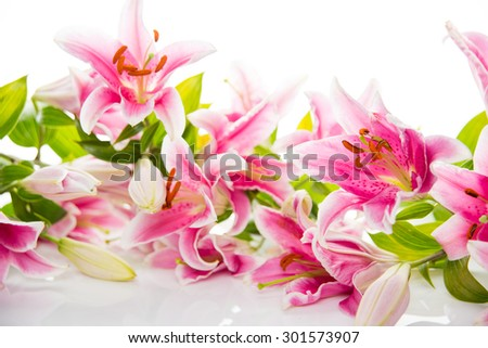 Beautiful Pink Lilies on White Background - stock photo